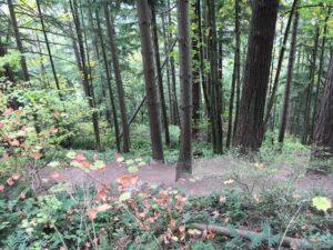 Places I like to hike in Washington